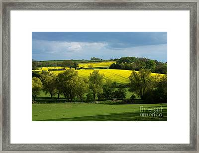 Yellow Fields In The Sun Framed Print