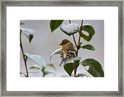 Yellow Finch On Branch Framed Print by Denise Romano