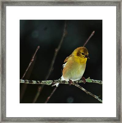 Framed Print featuring the photograph Yellow Finery by John Harding