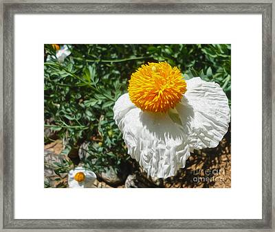 Yellow Flower - 02 Framed Print by Gregory Dyer