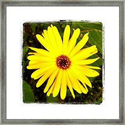 Yellow Flower 12 Framed Print