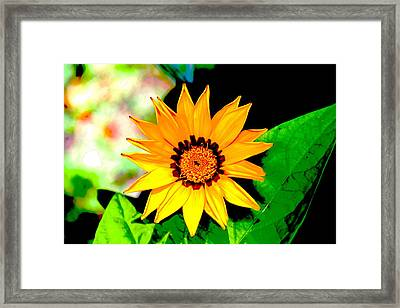 Yellow Flower Framed Print by Carolyn Reinhart