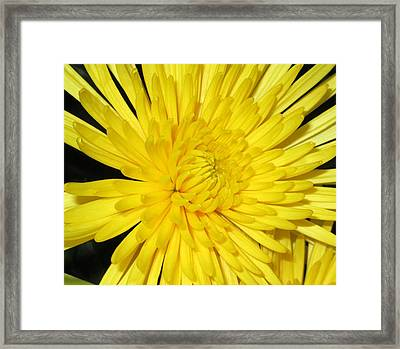 Yellow Flower Closeup Framed Print by Barbara Yearty