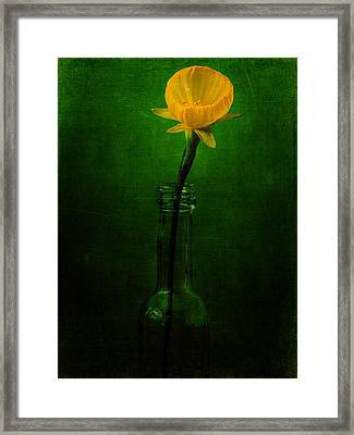 Yellow Flower In A Bottle I Framed Print by Marco Oliveira