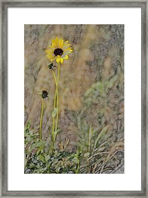 Yellow Flower Framed Print by Joyce  Wasser