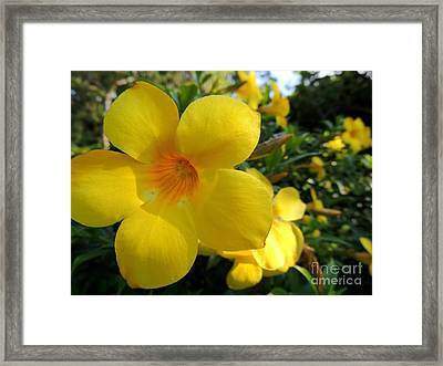 Framed Print featuring the photograph Yellow Flower by Kristine Merc