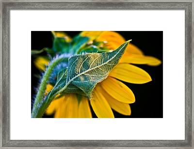 Yellow Flower Framed Print by Mark Alder