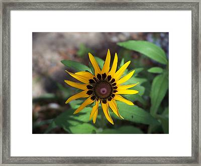 Framed Print featuring the photograph Yellow Flower by Michele Kaiser