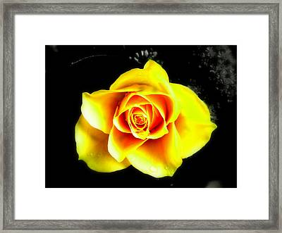 Yellow Flower On A Dark Background Framed Print