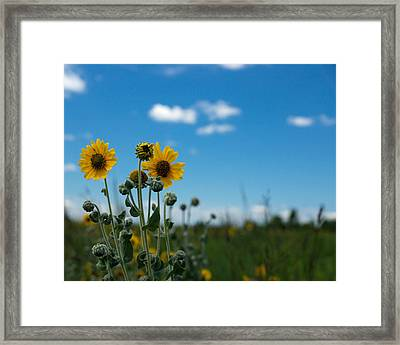 Yellow Flower On Blue Sky Framed Print