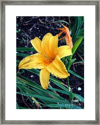 Yellow Flower Framed Print by Sergey Lukashin