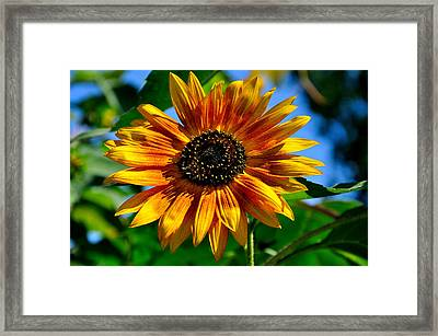 Yellow Flower Framed Print by Todd Hostetter