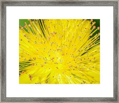 Framed Print featuring the photograph Yellow Flower  by Trace Kittrell