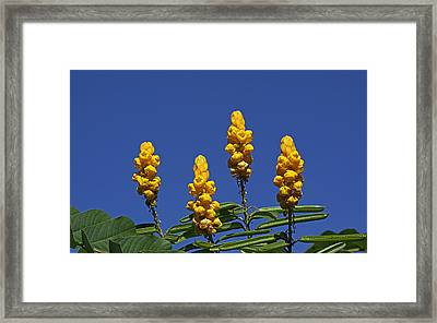 Yellow Flowers Against Blue Sky Framed Print