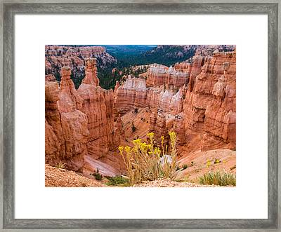 Yellow Flowers And Hoodos Framed Print