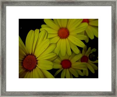 Yellow Flowers Framed Print by Andrea Galiffi