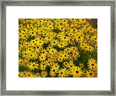 Yellow Flowers Framed Print by Fabian Cardon
