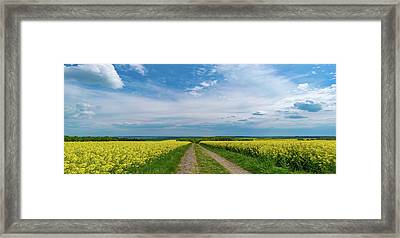 Yellow Flowers In A Field Framed Print by Wladimir Bulgar/science Photo Library