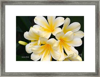 Framed Print featuring the photograph Clivia Yellow Flowers by Jeannie Rhode