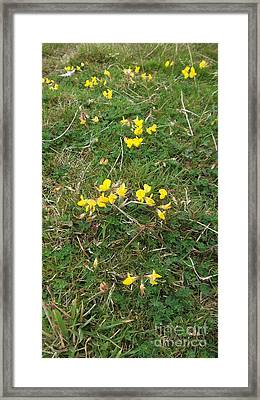 Yellow Flowers Framed Print by John Williams