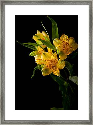 Framed Print featuring the photograph Yellow Flowers by Sennie Pierson