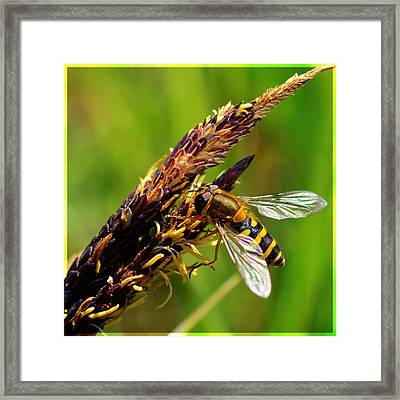 Yellow Fly Framed Print by Tommytechno Sweden