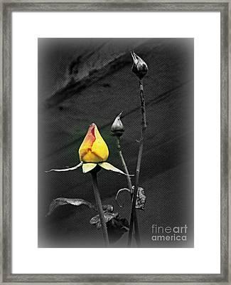 Yellow Focus Framed Print by Carol  Hynes