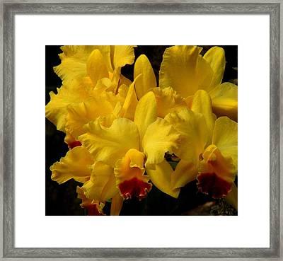 Yellow Folds Framed Print