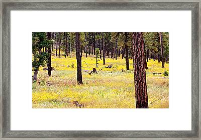 Yellow Forest Framed Print by Kume Bryant