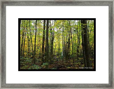 Framed Print featuring the photograph Yellow Forrest by Michaela Preston