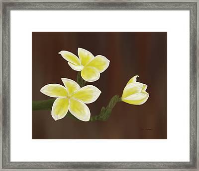 Yellow Frangipani Framed Print by Tim Stringer