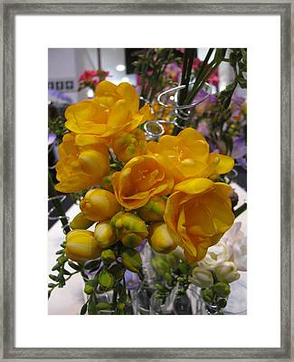 Yellow Freesia Framed Print by Alfred Ng