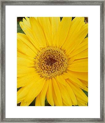 Yellow Fusion Framed Print by Sheri McLeroy