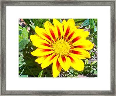 Framed Print featuring the photograph Yellow Garden Gerber by Elvira Ladocki