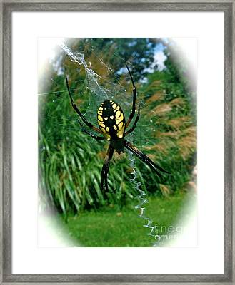 Yellow Garden Spider Framed Print by Linda Walker