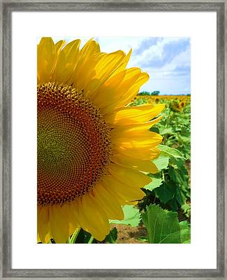 Yellow Glory #2 Framed Print by Robert ONeil