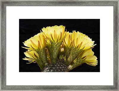 Yellow Gold Framed Print by Kelley King