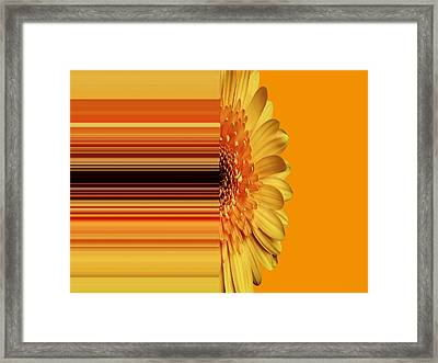 Yellow Gold Framed Print