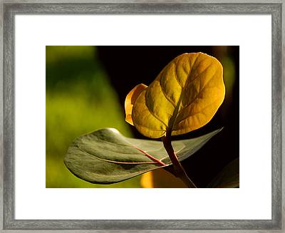 Framed Print featuring the photograph Yellow-green by Lorenzo Cassina