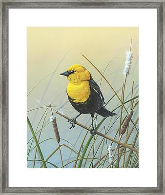 Framed Print featuring the painting Yellow-headed Black Bird by Mike Brown