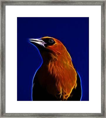 Yellow Headed Blackbird Framed Print by Shane Bechler