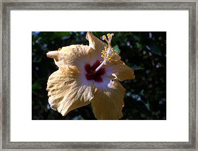 Yellow Hibiscus Framed Print