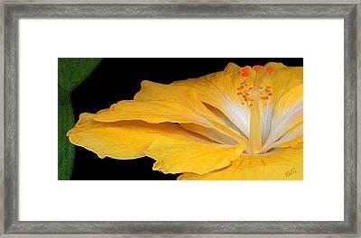 Yellow Hibiscus. Detail Framed Print by Ben and Raisa Gertsberg