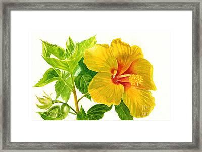 Yellow Hibiscus Flower Framed Print by Sharon Freeman