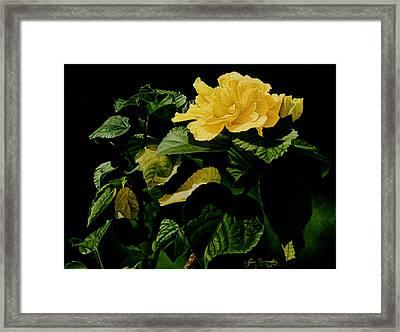 Yellow Hibiscus Framed Print by Gary  Hernandez