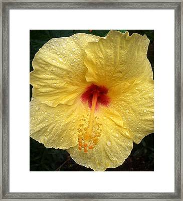 Framed Print featuring the photograph Yellow Hibiscus In The Rain by Alohi Fujimoto