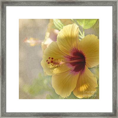 Yellow Hibiscus Framed Print by Peggy Hughes