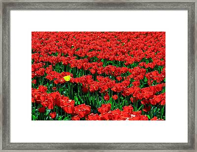 Yellow In A Red World Framed Print by Benjamin Yeager