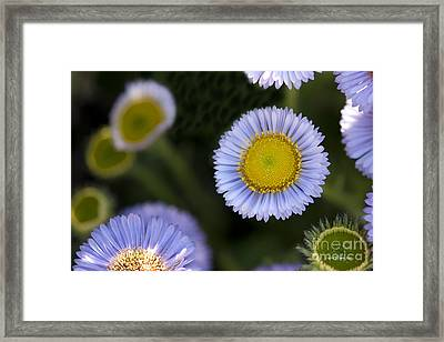 Yellow In The Middle Framed Print by Artist and Photographer Laura Wrede