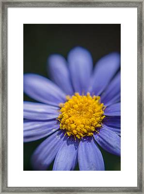 Yellow In The Middle Framed Print